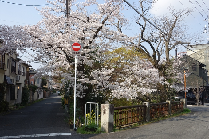 京都桜速報2019_27 No22