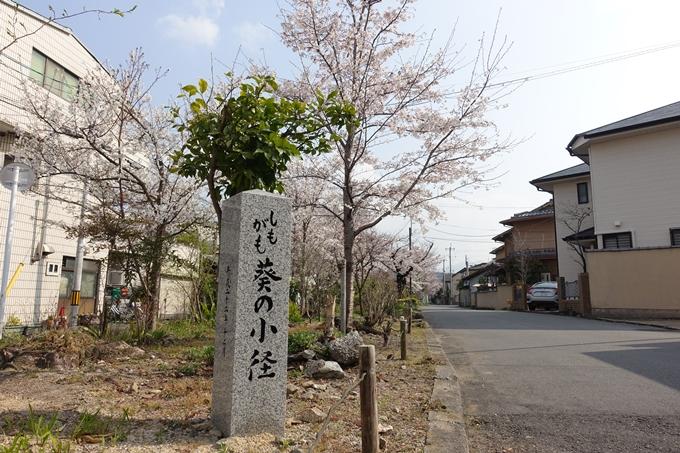 京都桜速報2019_27 No24