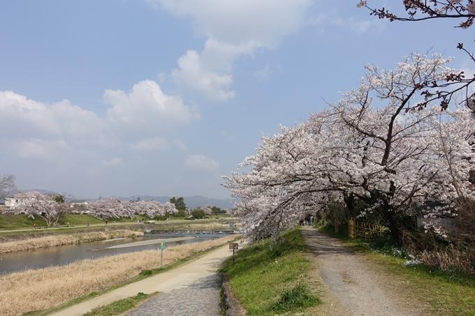 京都桜速報2019_28 No21