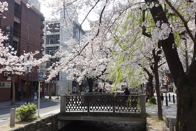 京都桜速報2019_29 No2