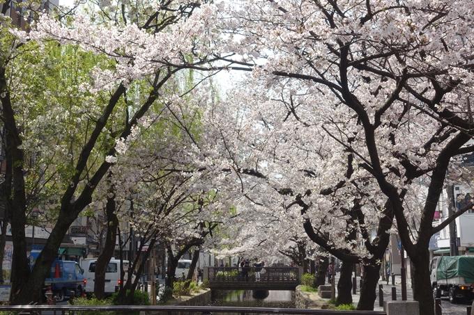 京都桜速報2019_29 No8
