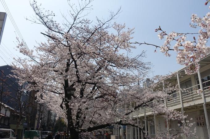 京都桜速報2019_29 No16