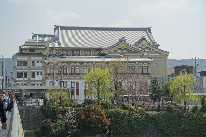 京都桜速報2019_28 No28