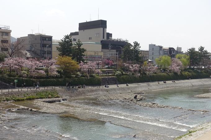 京都桜速報2019_28 No29