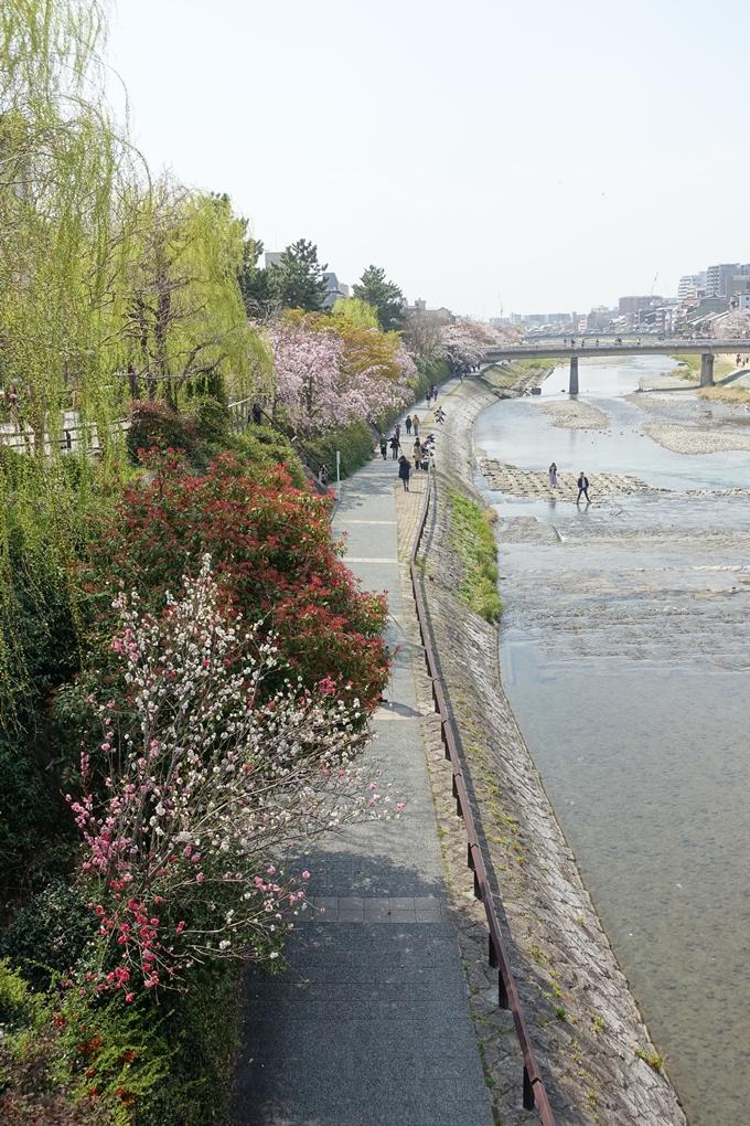 京都桜速報2019_28 No30