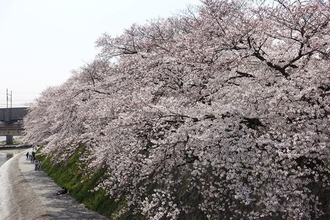 京都桜速報2019_28 No45