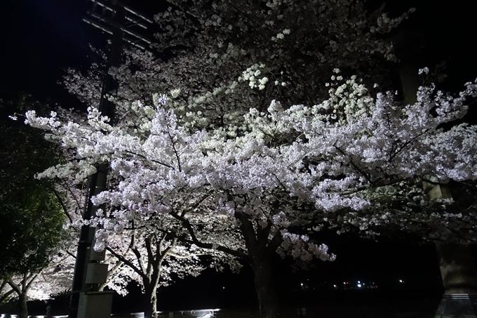 京都桜速報2019_30 No2