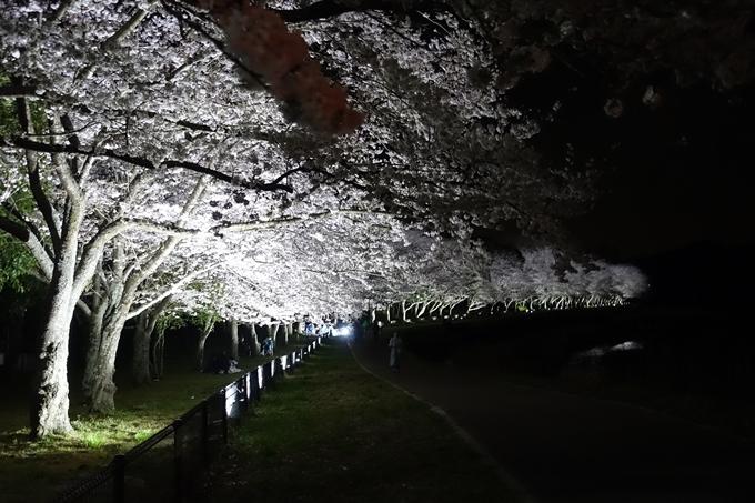 京都桜速報2019_30 No3