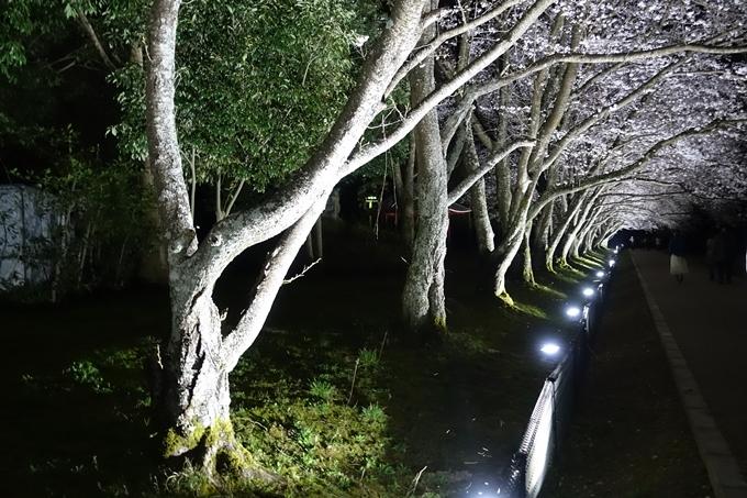 京都桜速報2019_30 No7