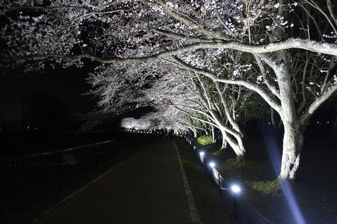 京都桜速報2019_30 No11