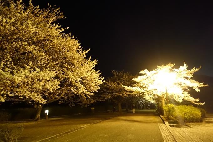 京都桜速報2019_41 No3