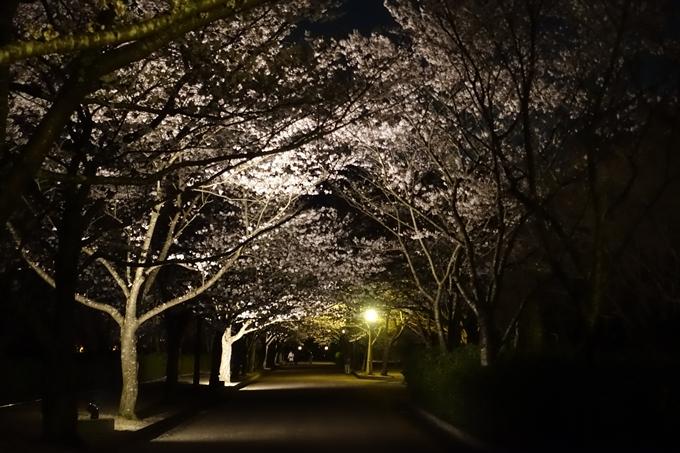 京都桜速報2019_41 No5
