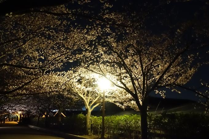 京都桜速報2019_41 No8