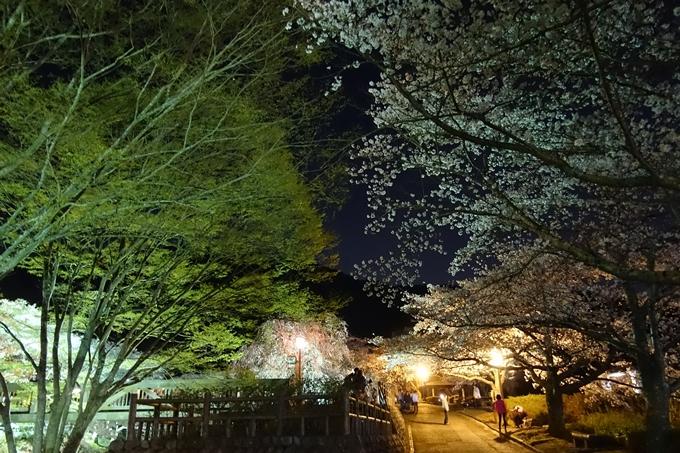 京都桜速報2019_41 No14