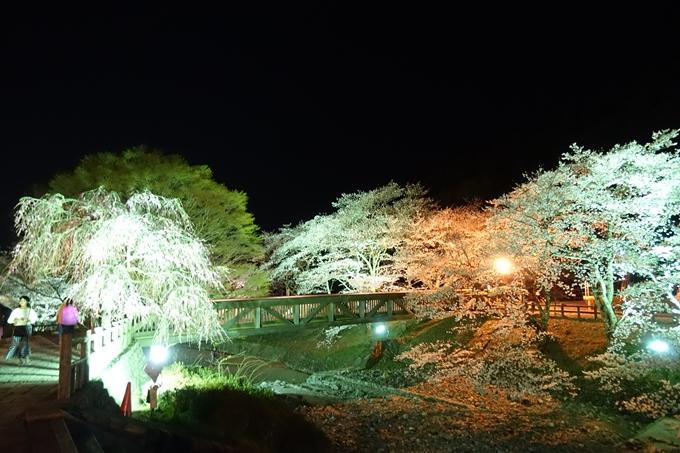 京都桜速報2019_41 No17