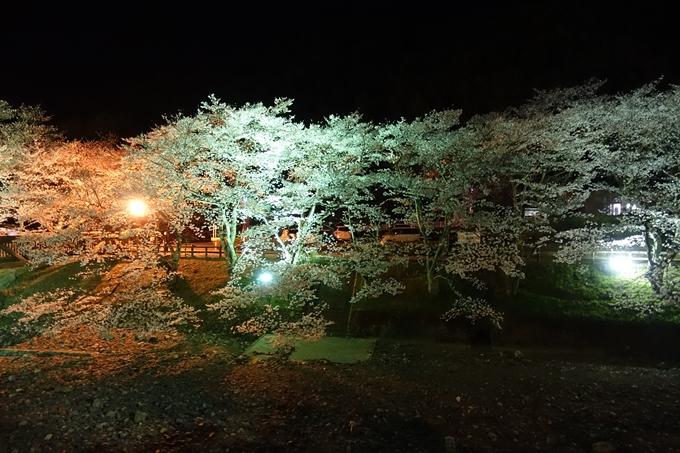 京都桜速報2019_41 No18