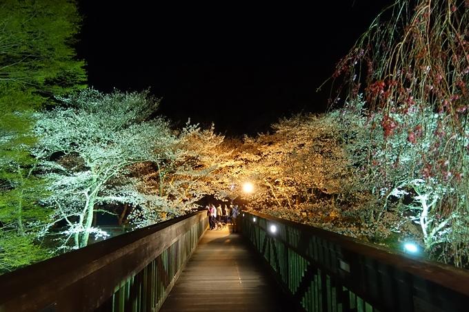 京都桜速報2019_41 No19