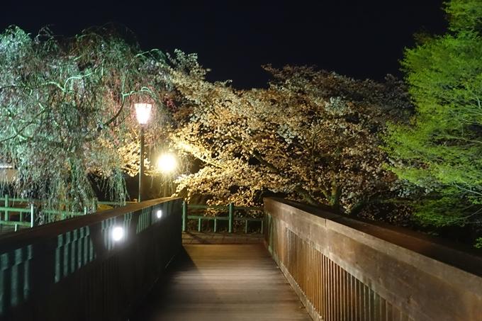 京都桜速報2019_41 No22