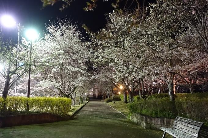 京都桜速報2019_41 No27