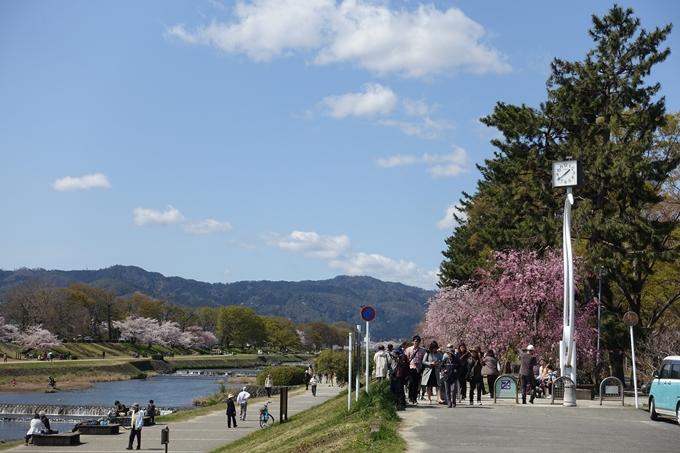 京都桜速報2019_31 No2
