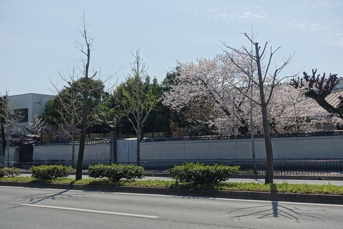 京都桜速報2019_32 No2