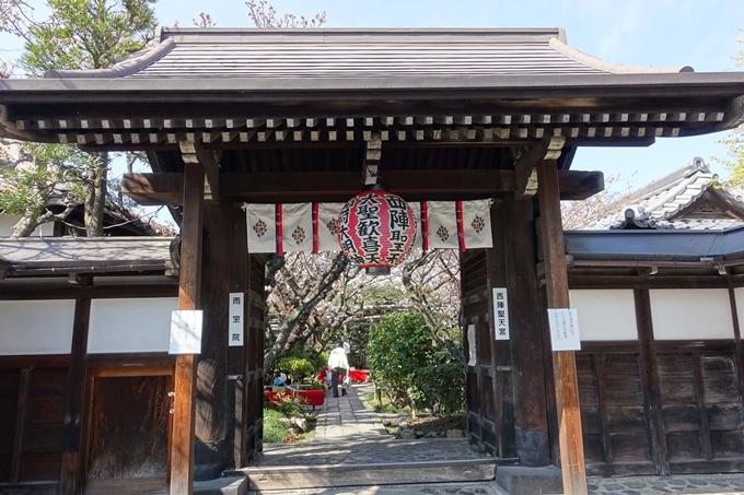 京都桜速報2019_33 No4