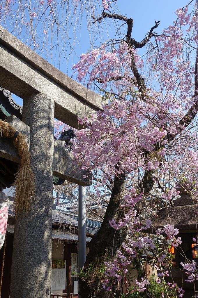 京都桜速報2019_33 No9
