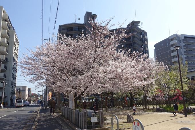 京都桜速報2019_34 No3