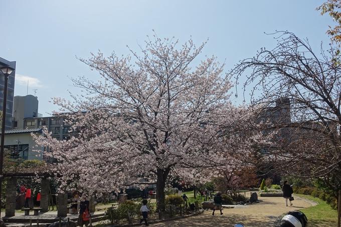 京都桜速報2019_34 No4