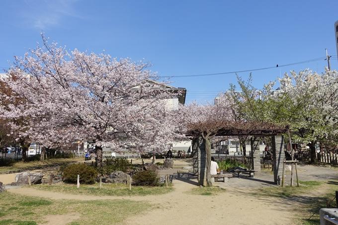 京都桜速報2019_34 No15