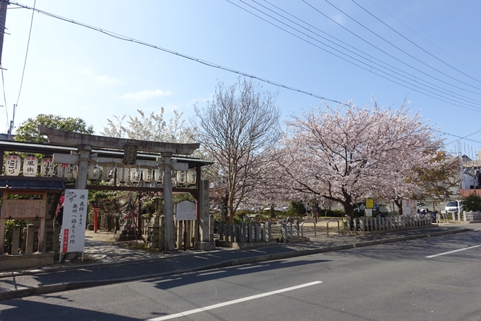 京都桜速報2019_35 No4