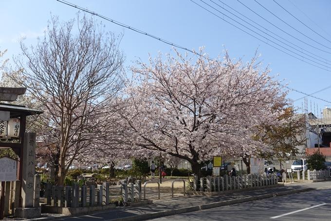 京都桜速報2019_34 No2