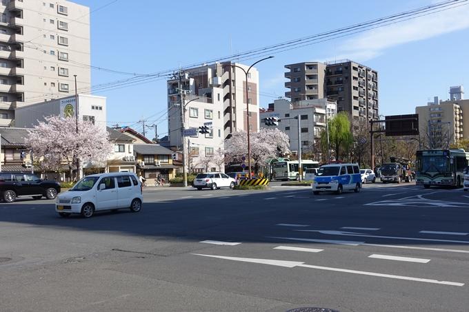 京都桜速報2019_36 No2
