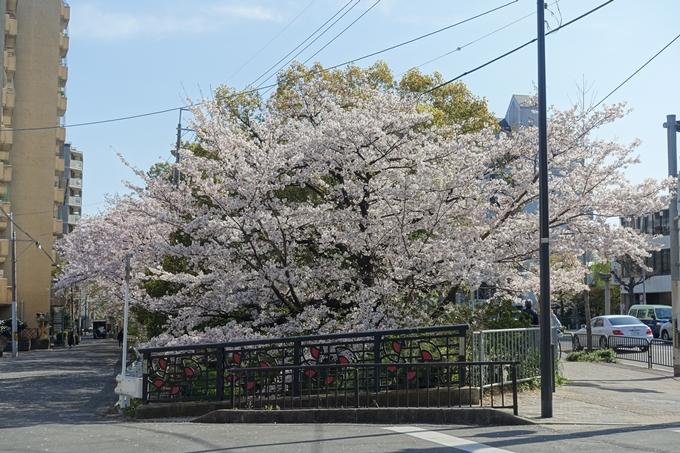 京都桜速報2019_36 No4