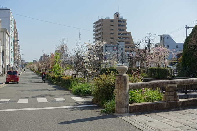 京都桜速報2019_36 No9