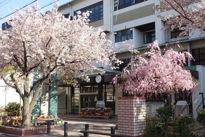 京都桜速報2019_37 No11