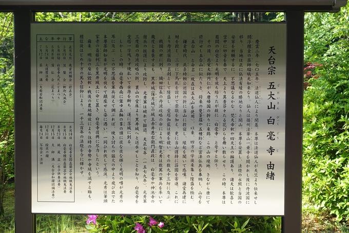 百毫寺_九尺藤 No4