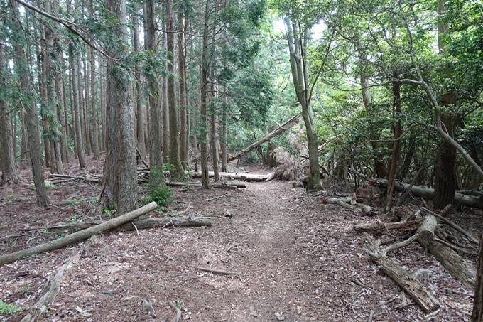 金毘羅神社・牛松山 No41