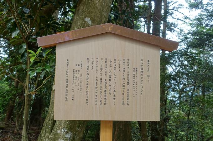 金毘羅神社・牛松山 No45