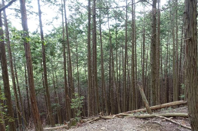 金毘羅神社・牛松山 No58