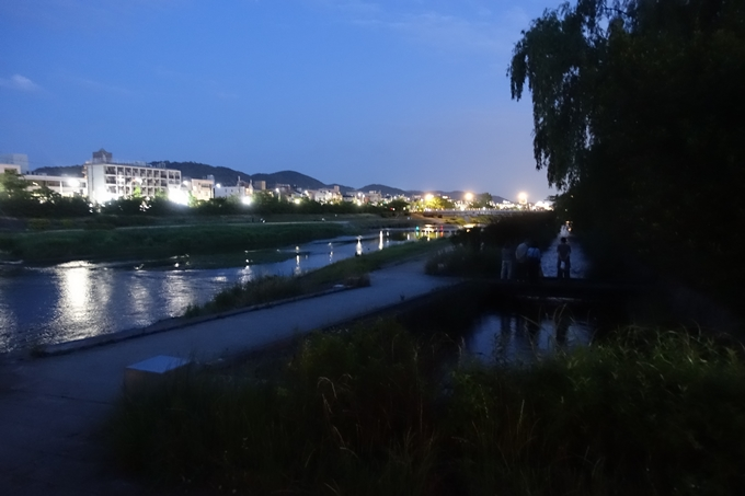 みそそぎ川_ホタル_2019 No2
