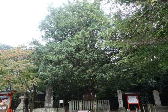 番外編_和歌山_速玉神社 No11