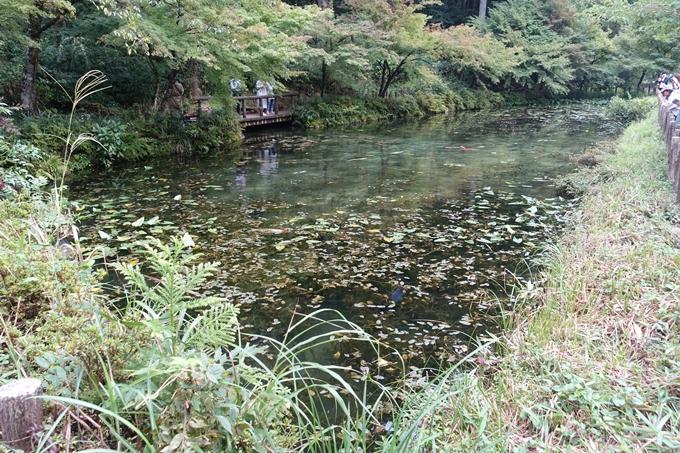 番外編_岐阜_関_モネの池 No16