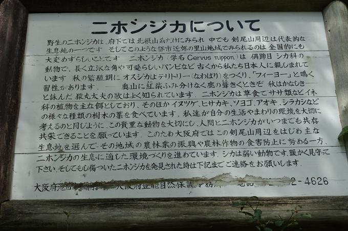 番外編_大阪_剣尾山_横尾山 No48