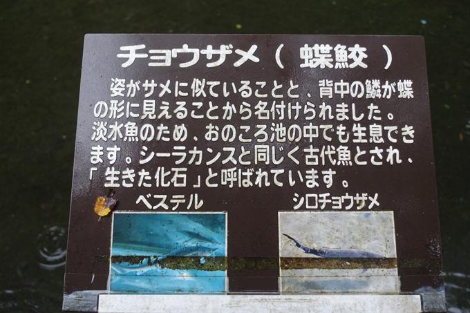 番外編_九州_宮崎県_高千穂峡 No66