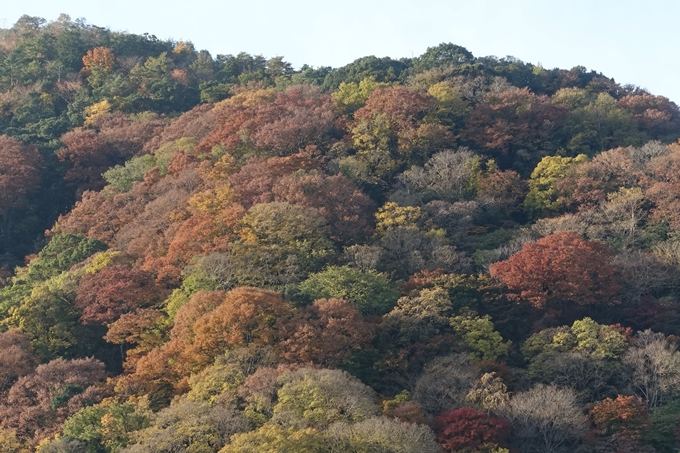 京都_紅葉情報_2019_16 嵯峨嵐山 No34