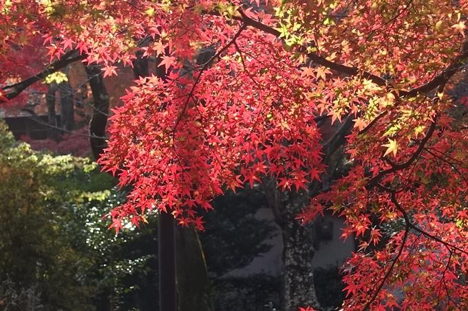 京都_紅葉情報_2019_16 嵯峨嵐山 No50