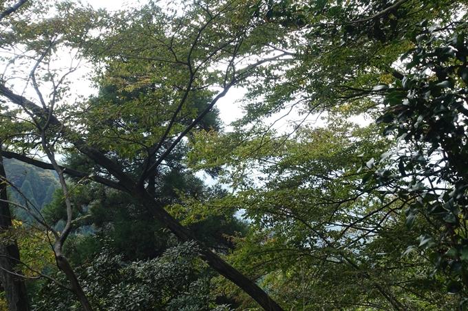 番外編_九州_熊本県_上色見熊野座神社 No51