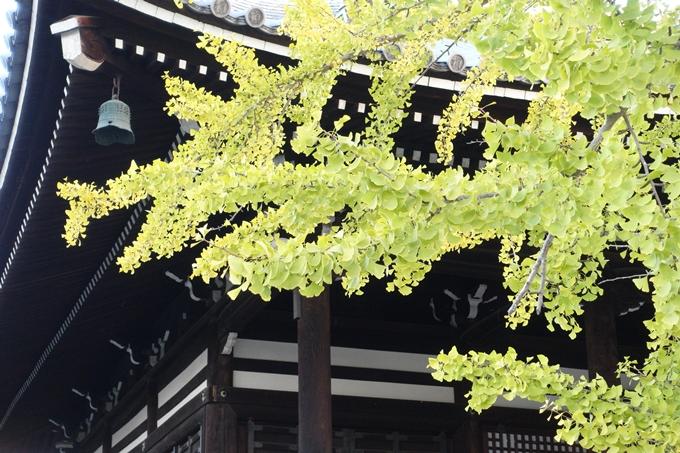 京都_紅葉情報_2019_03 頂妙寺 いちょう No17