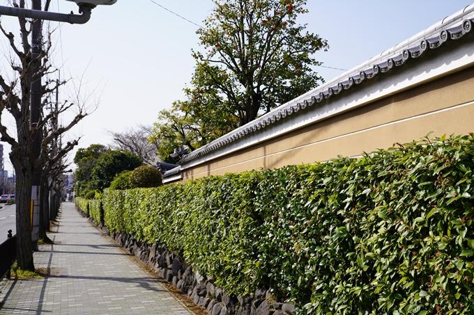 京都_桜_2020_04 No2